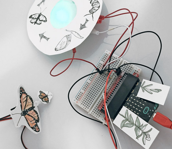 micro:bit butterfly life cycle